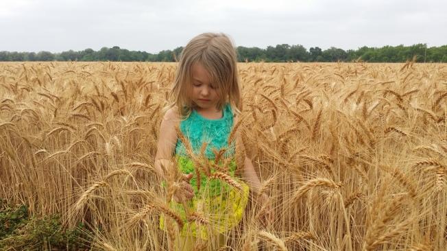Jolee Wheat